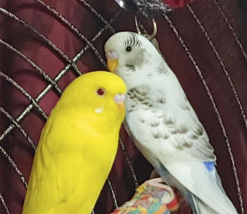 Hedwig and Marnie