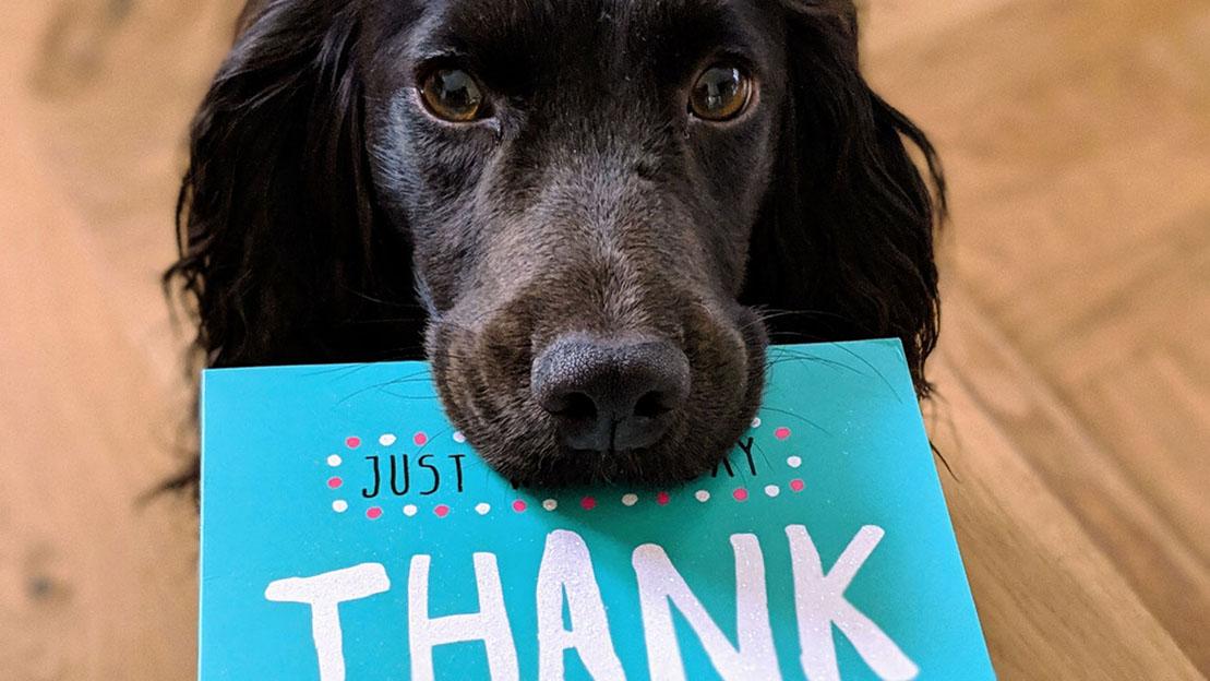 Grammar: Thank You. No, Thank You!